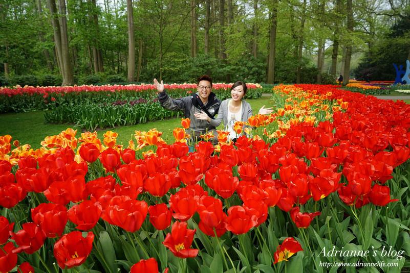【環遊歐洲68天】Day15-1 庫肯霍夫Keukenhof。世界最大最知名的鬱金香花園(內有詳細交通資訊)