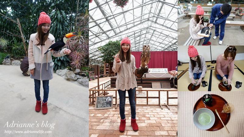 【日本島根】松江花鳥園(貓頭鷹花園)與動物親密接觸、日本三大茶道之一明明庵學習正統茶道、白鳥號遊船。