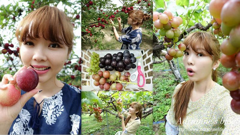 【北海道空知】來北海道必體驗採水果活動-大橋櫻桃園&千田葡萄園。
