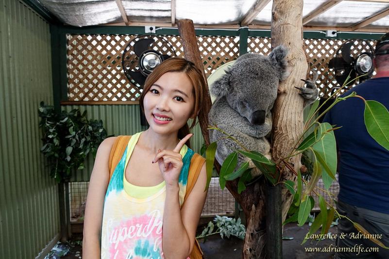 【澳洲雪梨自由行】雪梨必去!可以免費跟無尾熊近距離的Featherdale Wildlife Park!(內附交通資訊&地圖)