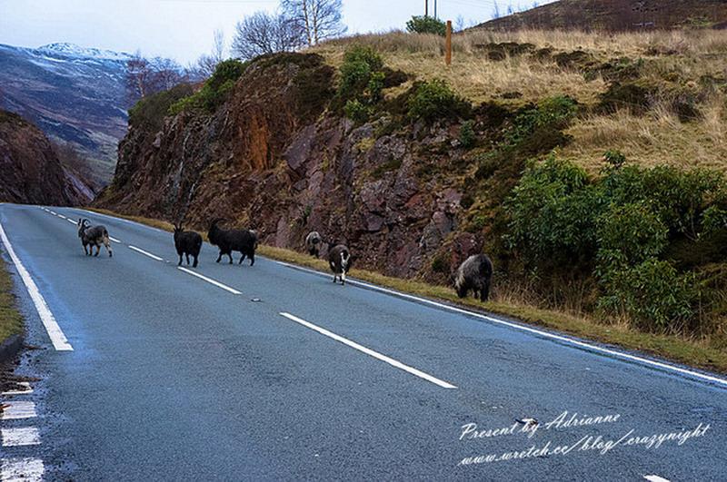 【英國UK ♥ 蘇格蘭】Day23 美景如天堂 ─  蘇格蘭高地Highland