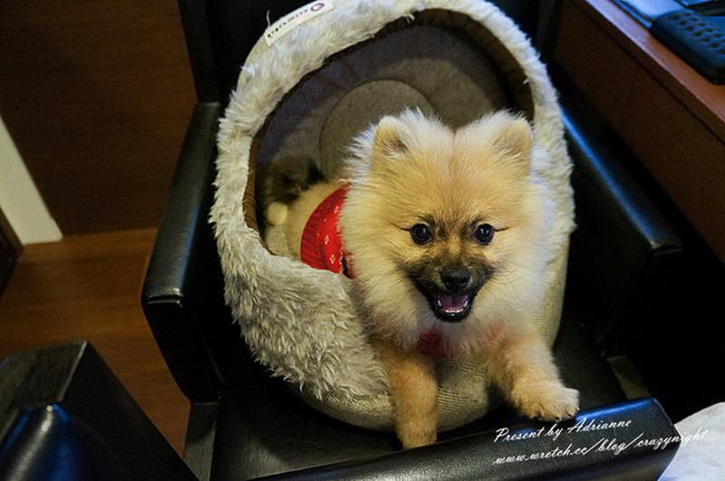 【Happy月記】201202 莫名其妙養了一隻狗?與寶貝Happy的緣分開始 (認養第1&2個月)