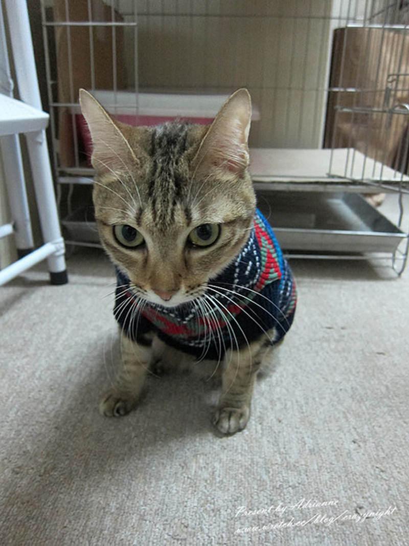 【貓貓】我最愛的女兒小精靈 ─ 認養到現在4年的點滴