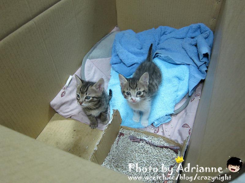 【快報】謝謝各位網友的愛心  小貓咪找到主人囉!!!
