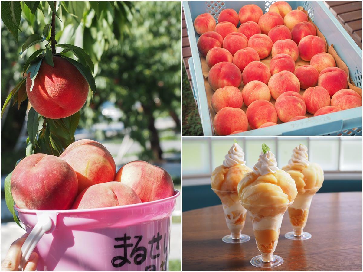 [福島旅遊推薦]MARUSEI果樹園-爽爽吃~不用1000圓的現摘水蜜桃體驗x超誘人水蜜桃聖代