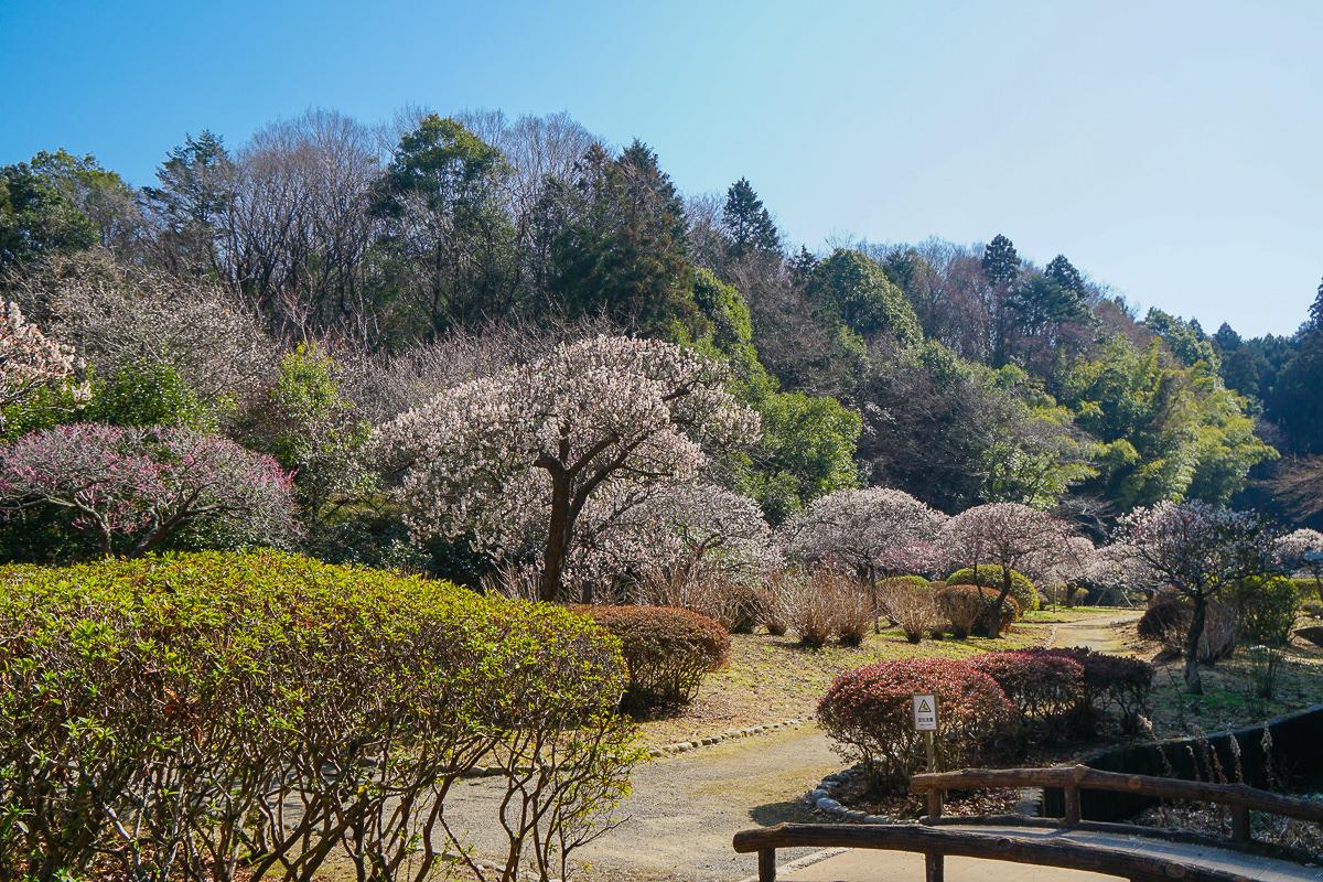 [茨城景點]西山の里「桃源」–西山御殿旁賞梅秘境~茶道優雅體驗