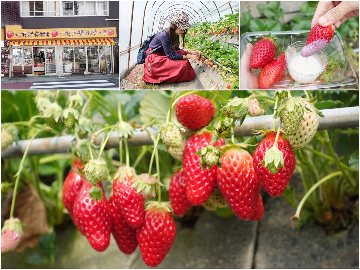 [靜岡景點]久能屋草莓園-靜岡採草莓去!30分鐘日本採草莓吃到飽