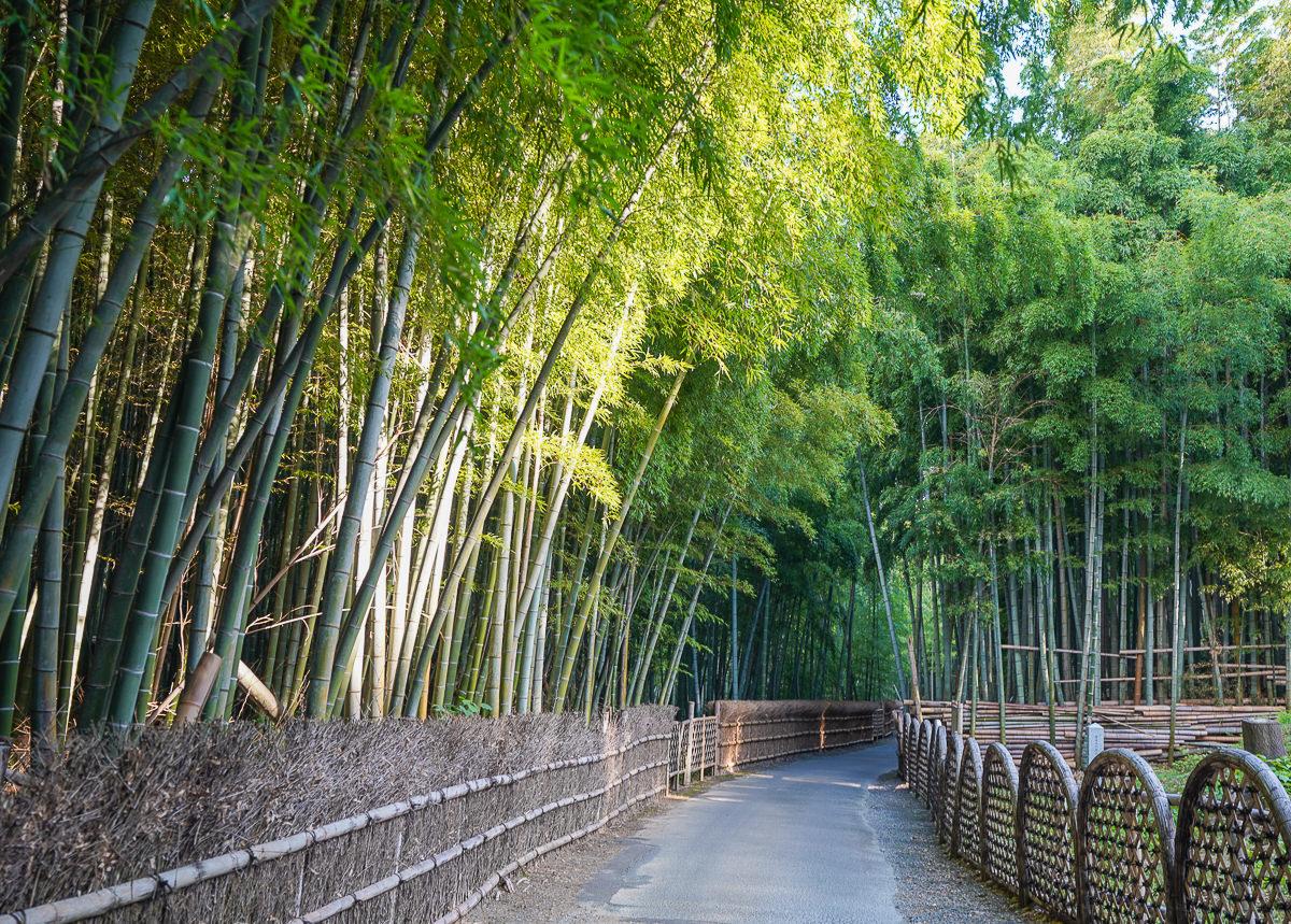 [京都景點推薦]京都向日竹の径.竹林公園-比嵐山更幽靜的京都竹林小徑