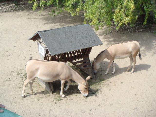 ❊2007年德國當小遊學生❊Day 8。科隆動物園 x 萊茵河