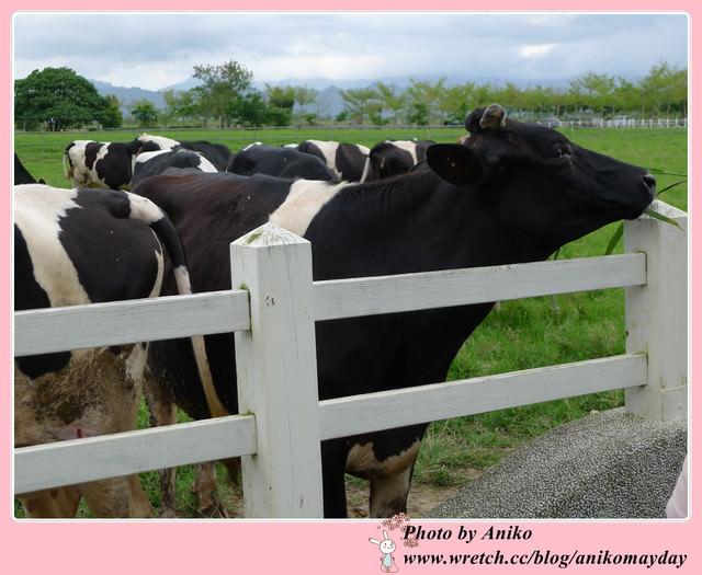 【2012春❤花蓮】奶香四溢的青青草原。瑞穗牧場