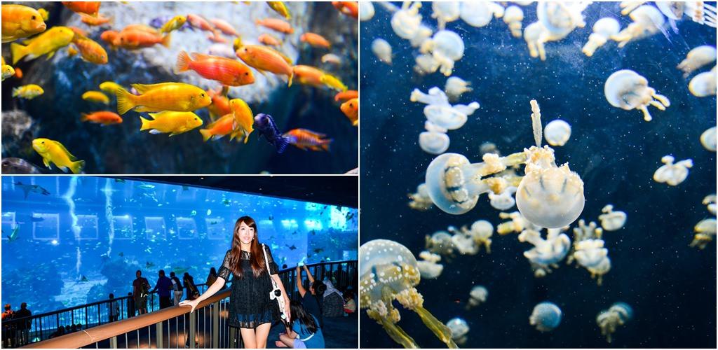【新加坡自由行】5天4夜新加坡自由行。新加坡名勝世界S.E.A.海洋館。全世界最大的海洋館!來聖淘沙必訪