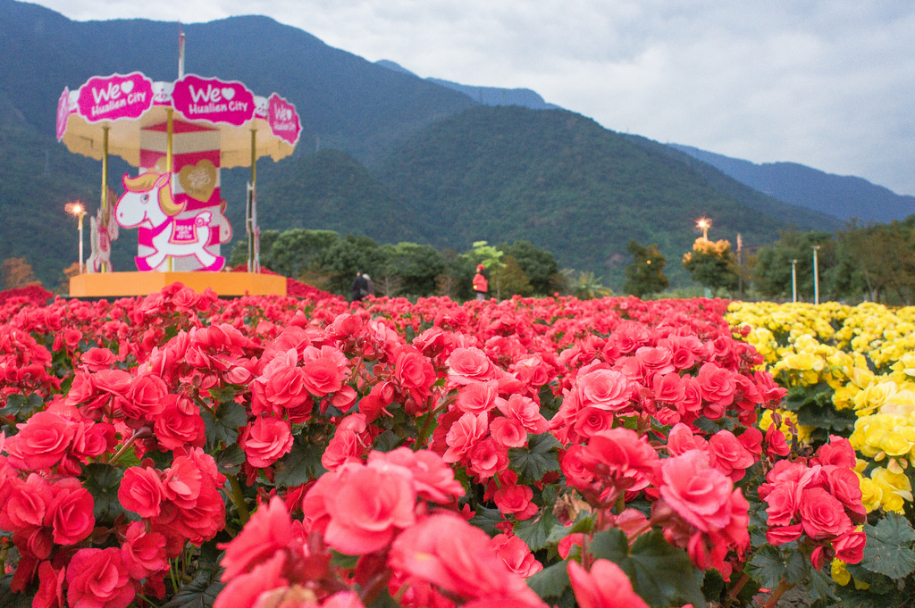 2015.Jan Flower @ Hualien