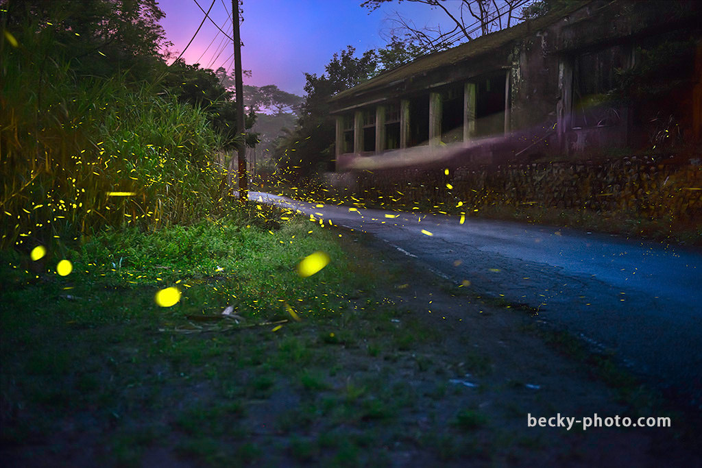 2015.Mar Fireflies @Hsinchu 新竹北埔螢火蟲