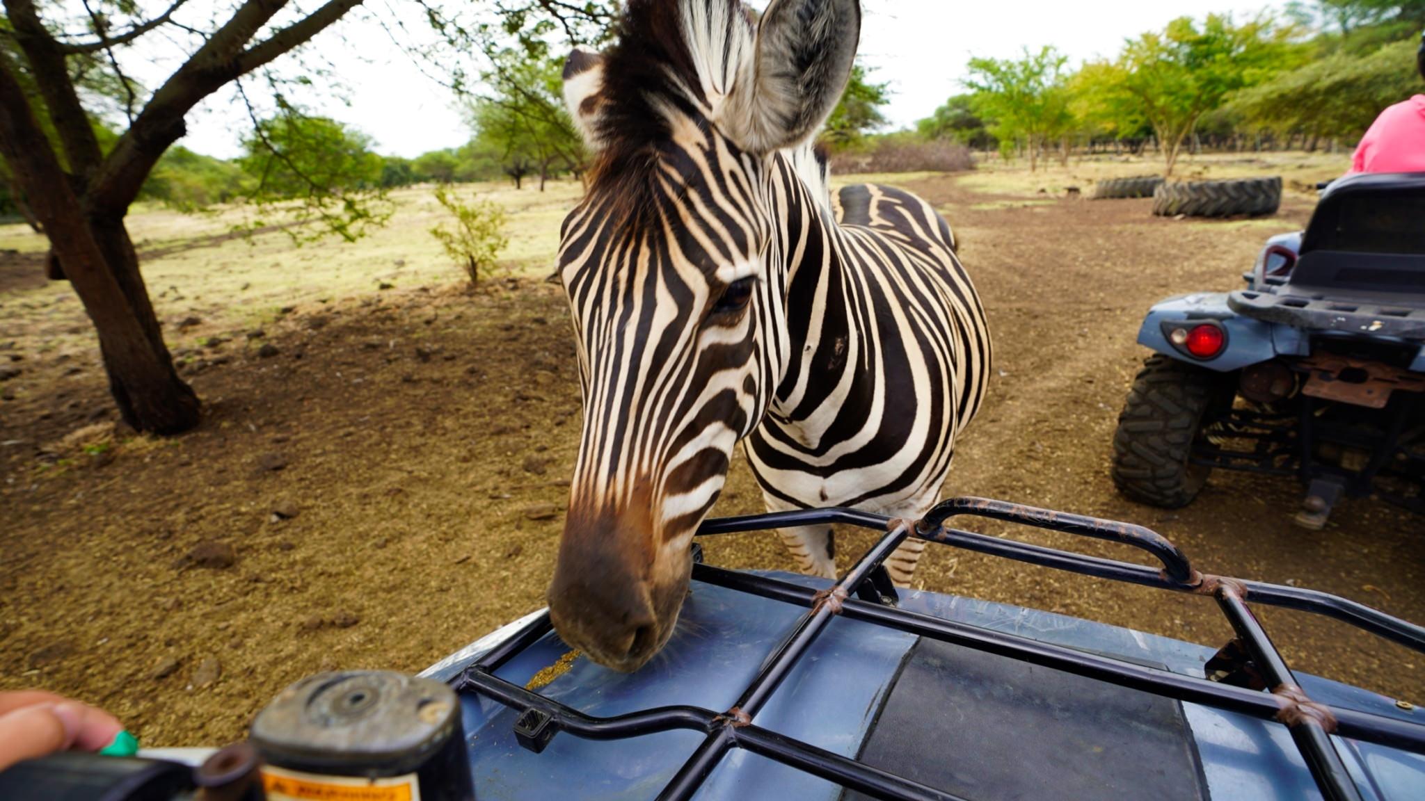 模里西斯,Mauritius,模里西斯景點,七色土,Casela自然公園,模里西斯旅遊