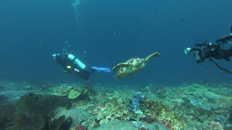 潛水日誌。巴里島潛點 Manta Point & SD Point