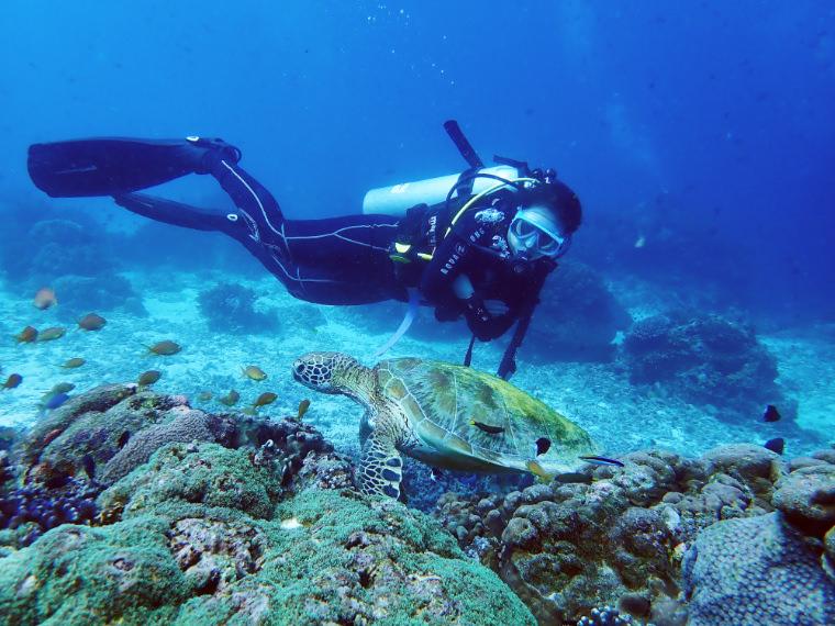 潛水日誌。宿霧巴里卡薩 Turtle Point & Black Forest