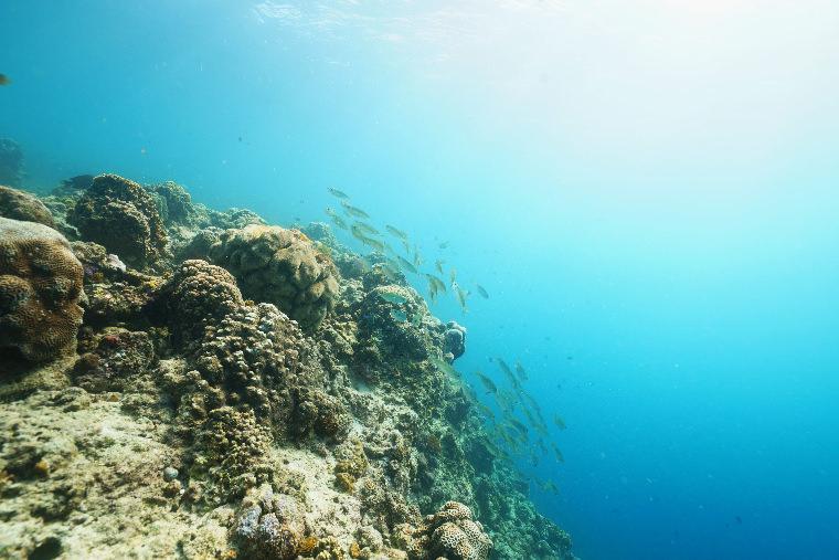 潛水日誌。宿霧墨寶Moalboal Sardines Point