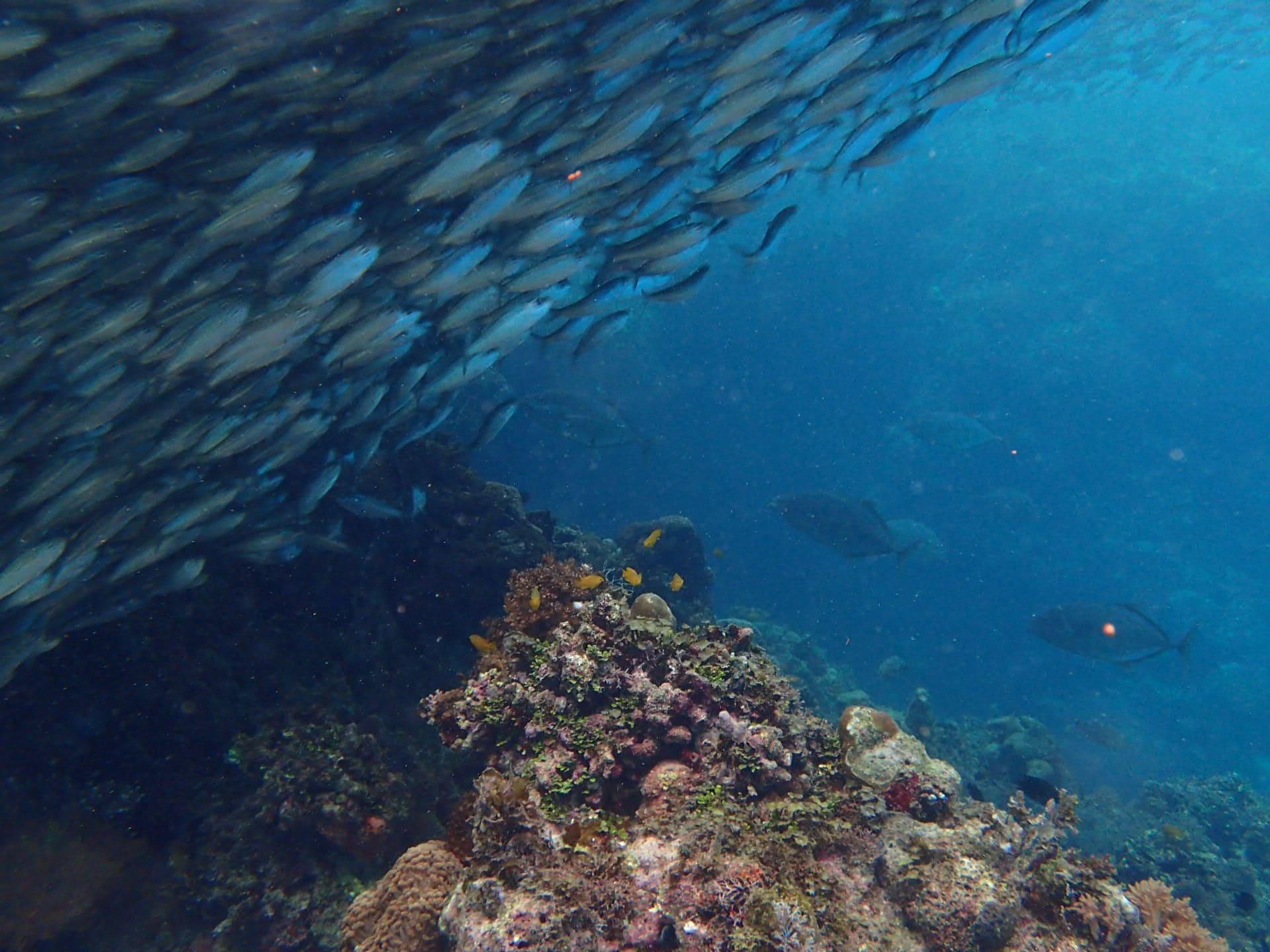 潛點介紹。菲律賓 薄荷島周邊潛點 Bohol Dive Site