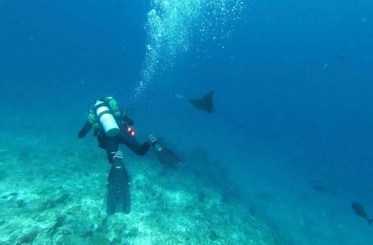 潛水日誌。馬爾地夫馬富士 Vilivaru Giri & Kandooma Thila