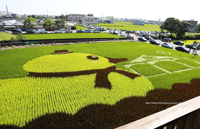 【苗栗苑裡景點】小鴨彩繪稻田.愛情果園-把稻田當畫布.好可愛的黃色小鴨