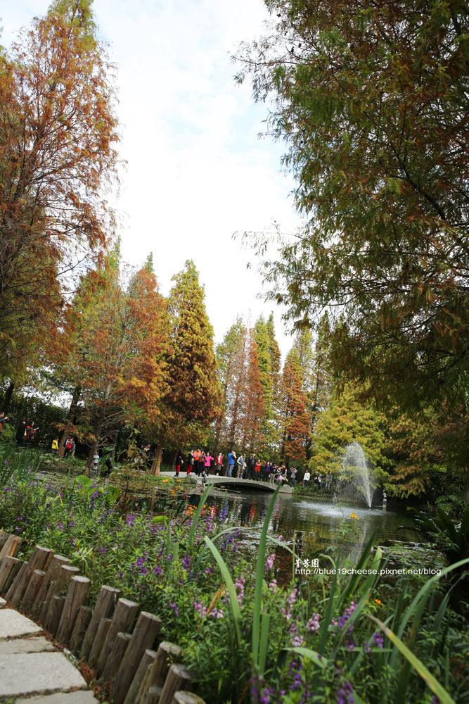 【彰化田尾景點推薦】菁芳園 – 美麗的落羽松是紅是綠決定了餐點的品質和服務的速度…