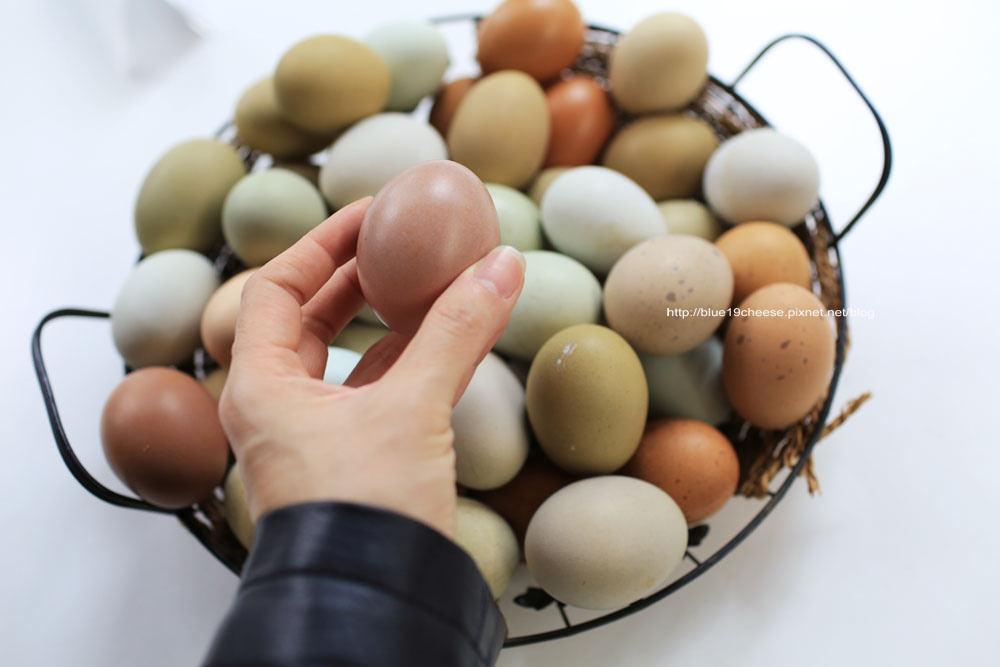 彰化 桂園自然生態農場 – 有漂亮的金雞和彩色蛋耶^^.一定要另外再安排個點喔