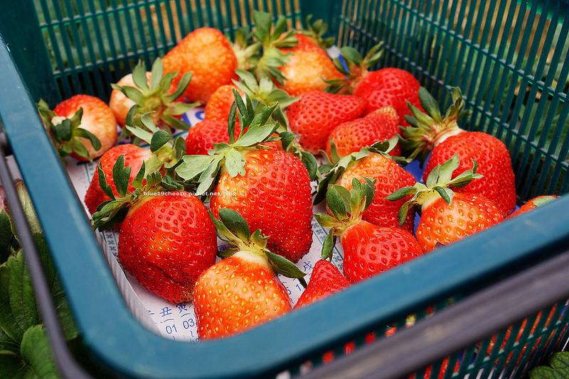 【苗栗卓蘭】紅寶石草莓園-去花露休閒農場可以順路到紅寶石草莓園採草莓.今年到四月初都還有喔!假日苗栗親子遊