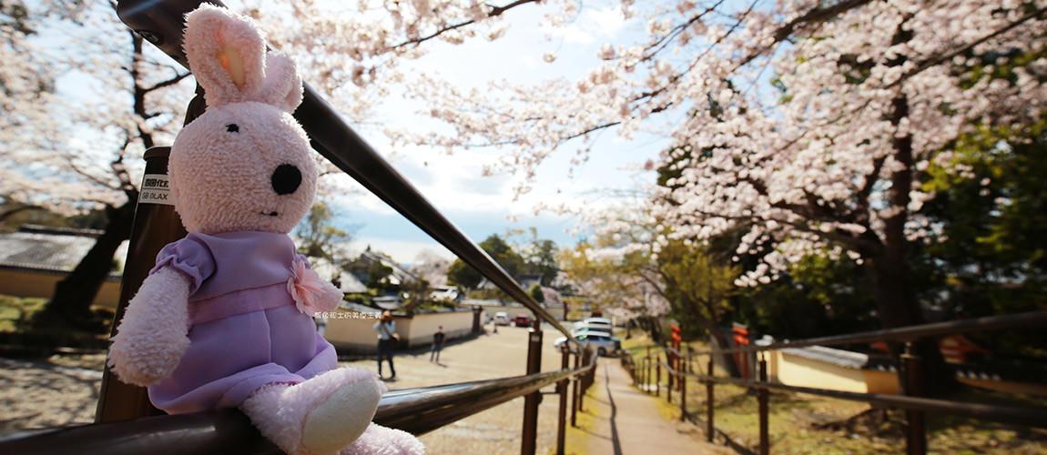 日本唯美櫻花