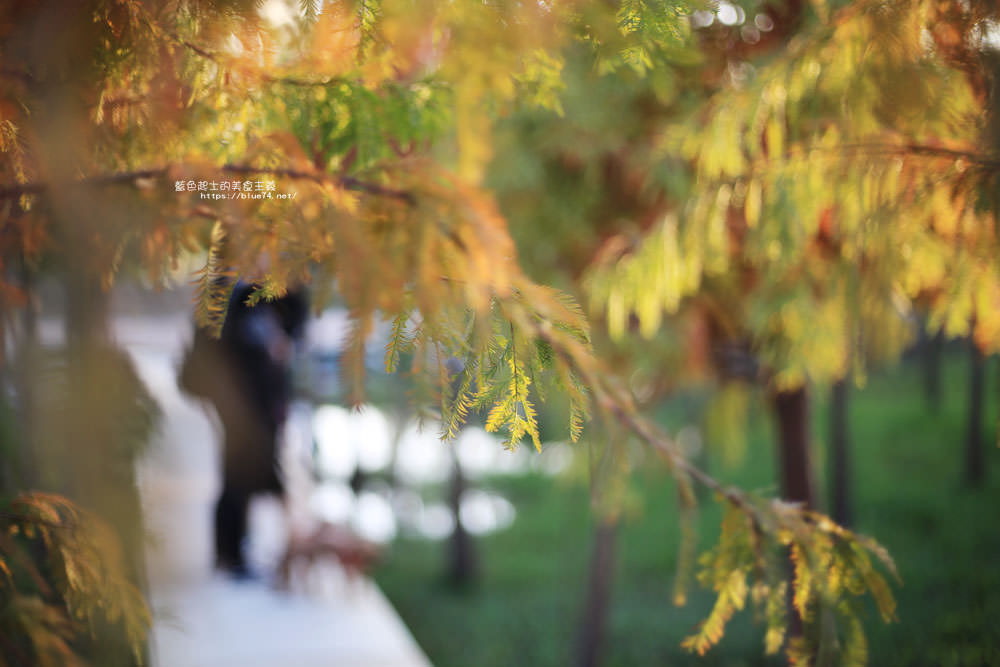 20180123232707 93 - 中科落羽松-台中落羽松秘境.水中棧道和倒影.還有波斯菊與油菜花海