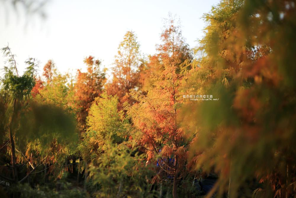 20180123232717 89 - 中科落羽松-台中落羽松秘境.水中棧道和倒影.還有波斯菊與油菜花海