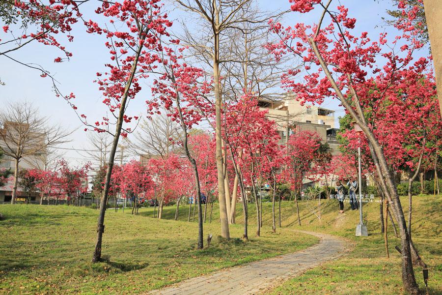 20180222011355 79 - 東勢河濱公園-對面小公園櫻花盛開