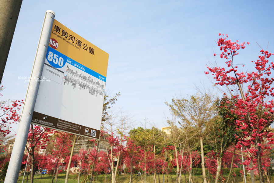 20180222011359 35 - 東勢河濱公園-對面小公園櫻花盛開