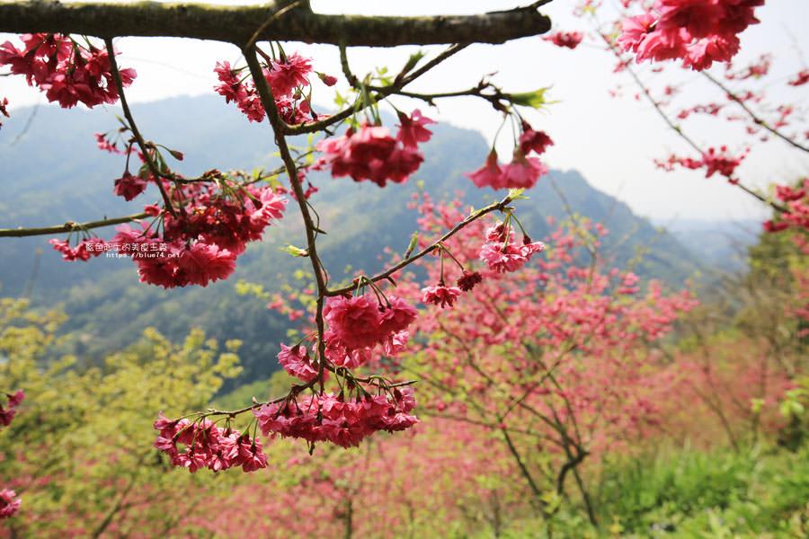 20180222013248 73 - 沐心泉休閒農場-來沐心泉被滿滿的盛開櫻花包圍吧