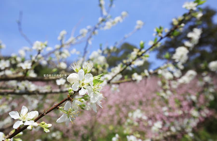 20180222013254 72 - 沐心泉休閒農場-來沐心泉被滿滿的盛開櫻花包圍吧