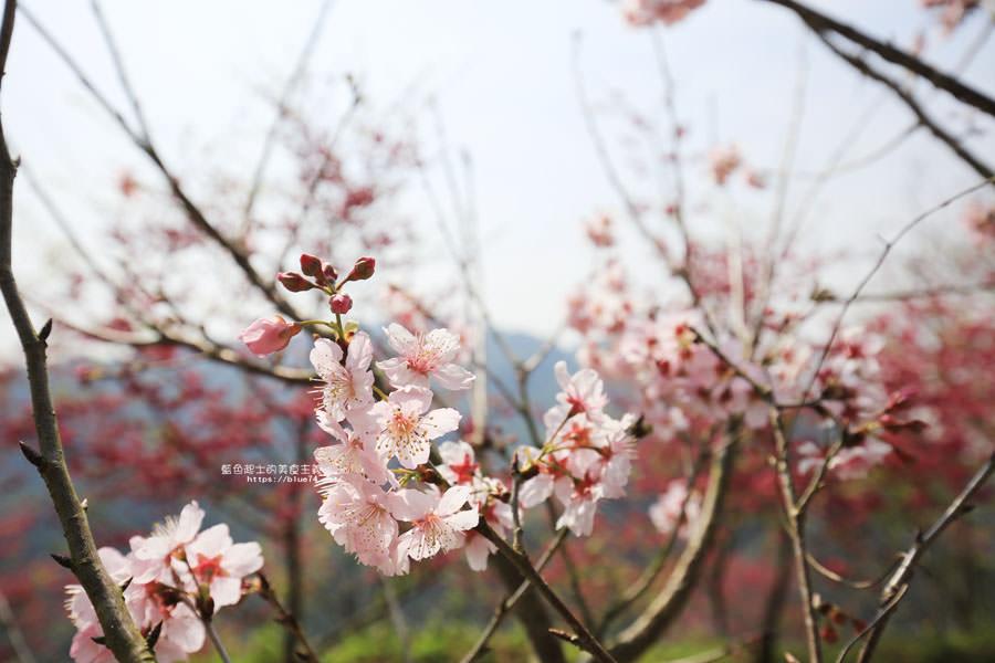 20180222013258 10 - 沐心泉休閒農場-來沐心泉被滿滿的盛開櫻花包圍吧