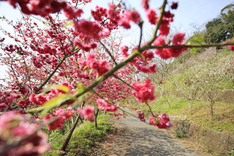 20180222013300 74 - 沐心泉休閒農場-來沐心泉被滿滿的盛開櫻花包圍吧