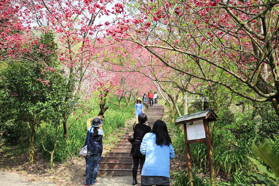 20180222013311 73 - 沐心泉休閒農場-來沐心泉被滿滿的盛開櫻花包圍吧