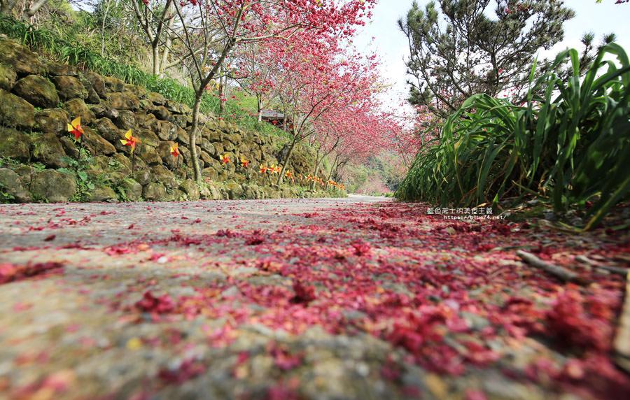 20180222013313 44 - 沐心泉休閒農場-來沐心泉被滿滿的盛開櫻花包圍吧