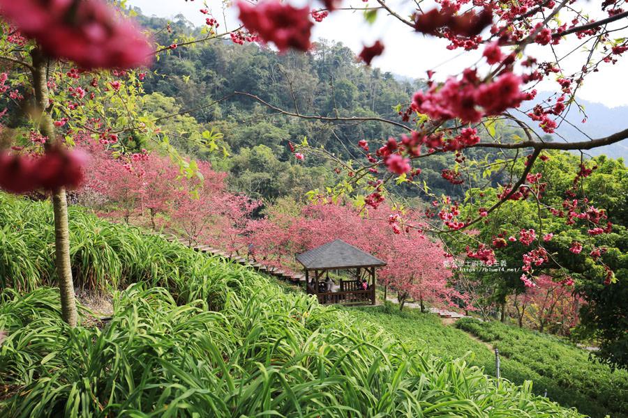 20180222013315 72 - 沐心泉休閒農場-來沐心泉被滿滿的盛開櫻花包圍吧