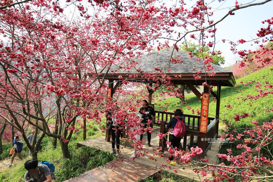 20180222013329 24 - 沐心泉休閒農場-來沐心泉被滿滿的盛開櫻花包圍吧