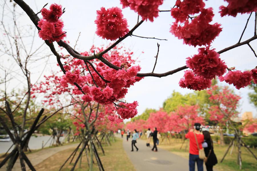 台中后里│崴立機電櫻花公園-櫻花步道免費開放參觀