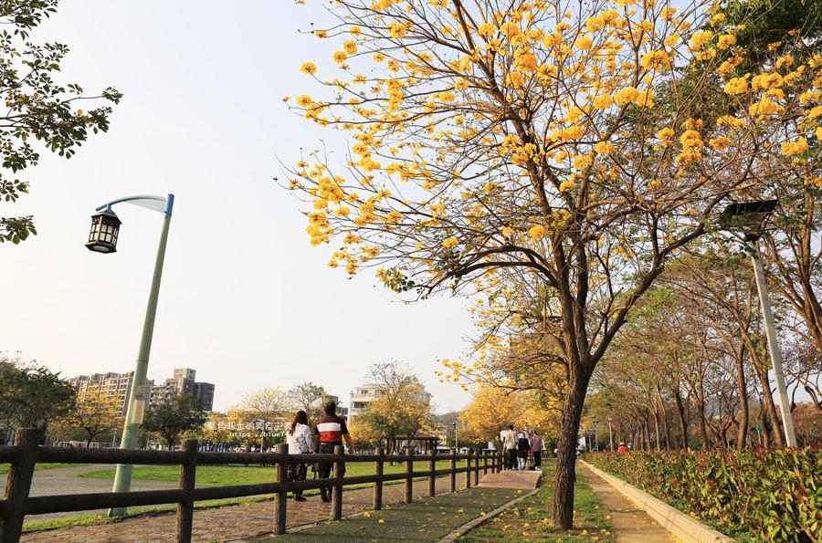 20180304003256 23 - 廍子公園-風鈴木從情人橋一路綻放到台中最美黃金公園裡