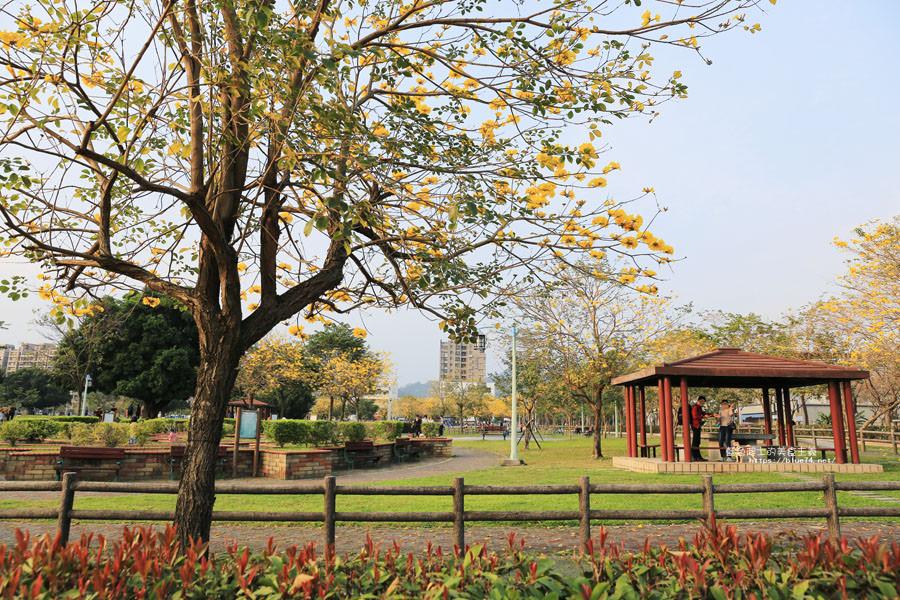 20180304003257 36 - 廍子公園-風鈴木從情人橋一路綻放到台中最美黃金公園裡