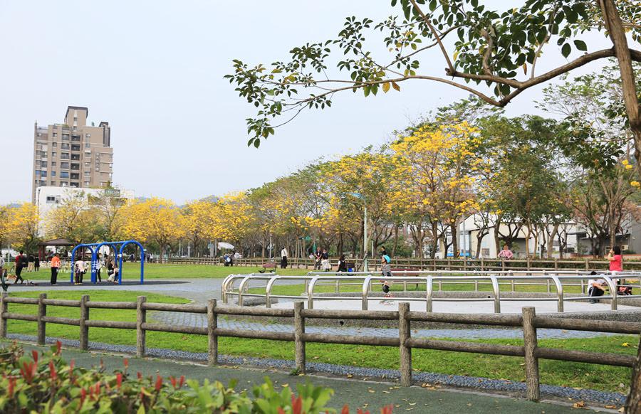 20180304003308 66 - 廍子公園-風鈴木從情人橋一路綻放到台中最美黃金公園裡