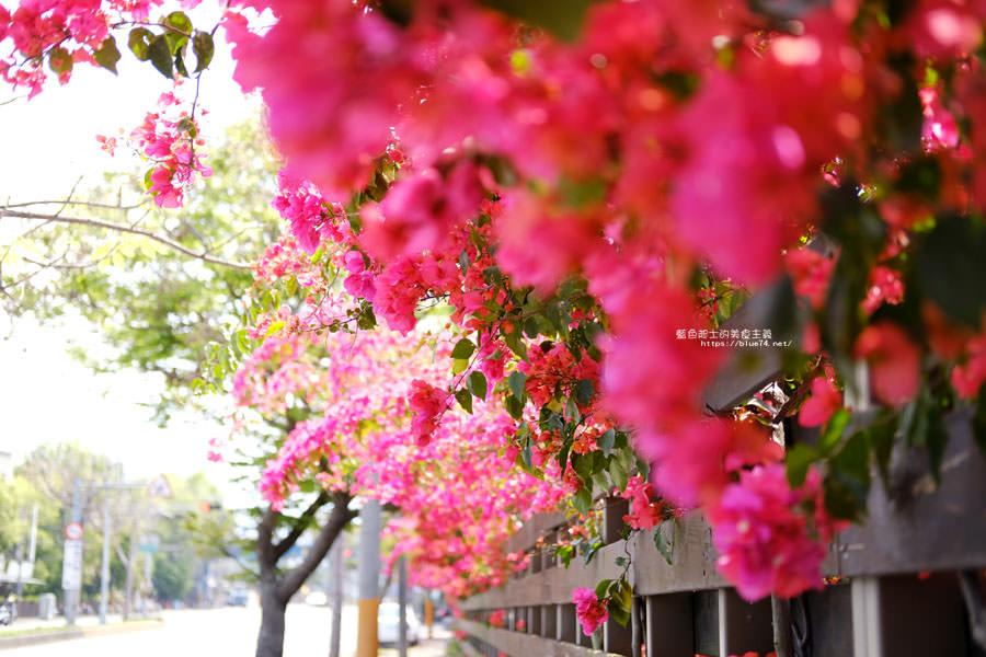 20180317000424 16 - 桃紅浪漫九重葛花牆點綴了公車站.等車也很唯美