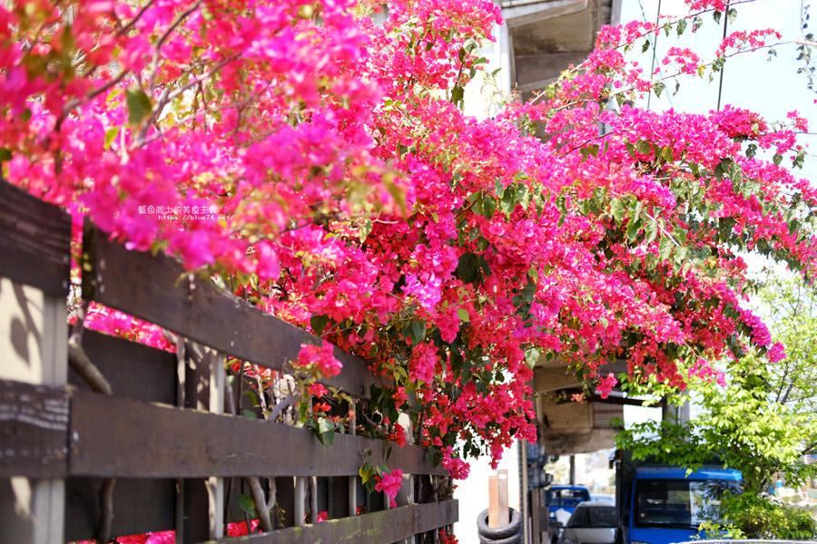 20180317000427 46 - 桃紅浪漫九重葛花牆點綴了公車站.等車也很唯美