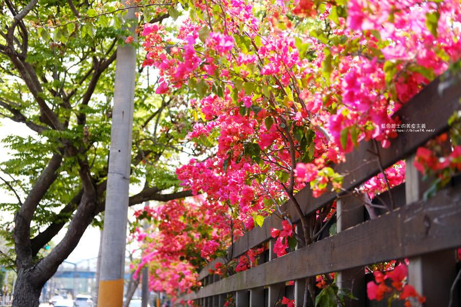 20180317000428 31 - 桃紅浪漫九重葛花牆點綴了公車站.等車也很唯美