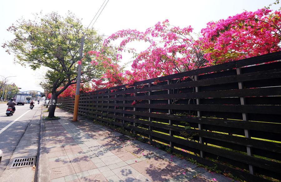 20180317000429 16 - 桃紅浪漫九重葛花牆點綴了公車站.等車也很唯美