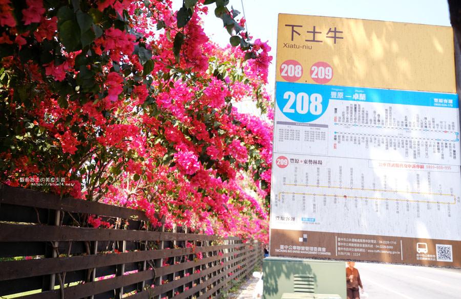 20180317000432 62 - 桃紅浪漫九重葛花牆點綴了公車站.等車也很唯美