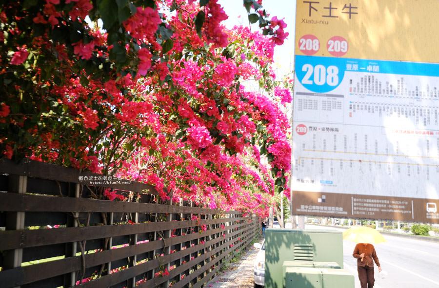 20180317000433 45 - 桃紅浪漫九重葛花牆點綴了公車站.等車也很唯美